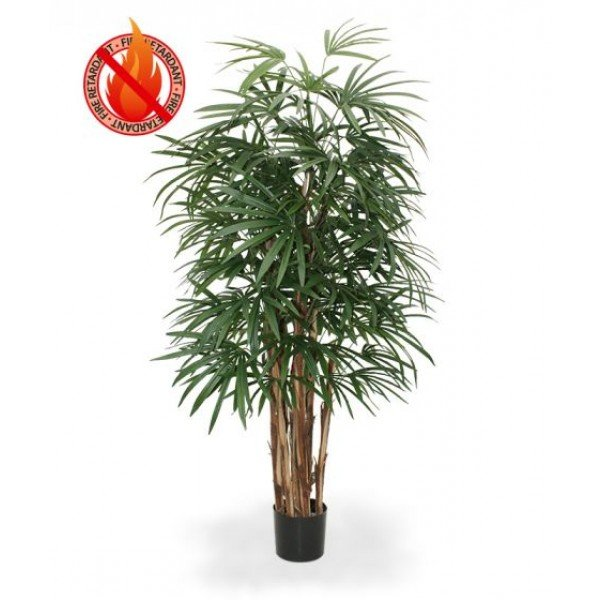 Ook wel bekend als 'the lady palm'